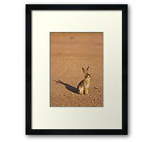 Cottontail Rabbit Framed Print