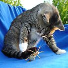 White Pawed Tabby Cat Playing With Winged Insect by taiche