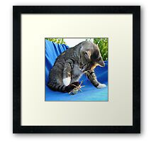 White Pawed Tabby Cat Playing With Winged Insect Framed Print