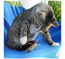 White Pawed Tabby Cat Playing With Winged Insect Poster