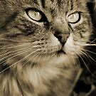 THE TABBY CAT II by Leny .