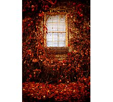 Feeling French Provincial, Beechworth Photographic Print