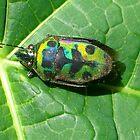 Beetle beauty 3 by jaycraft