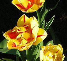 Spring Sunshine by Debbie Schiff
