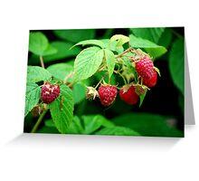 Raspberry  Greeting Card