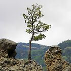 Determined Tree by Jimlhanson