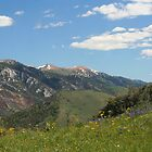 High Schells Wilderness by Arla M. Ruggles
