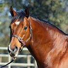 Stallion portrait by chelka09