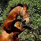 Stallion rearing by chelka09