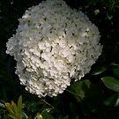 Beauty in White by WaleskaL
