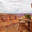 CANYONLANDS NAT'L PARK by hugo