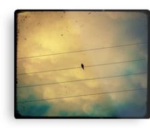 Like a bird on a wire... Metal Print