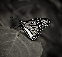 Wings  by Christine  Wilson Photography