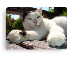 Black and White Bicolor Cat Lounging on A Park Bench Canvas Print