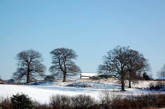 Snow in Essex 2009 by Anita52
