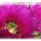 Hedgehog Cactus Bloom by Marianne Skov Jensen