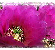 Hedgehog Cactus Bloom by Marianne Skov Jensen