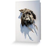 Poor Little Dead Bird Greeting Card
