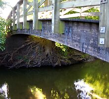 Tree Root Study VIII, or Bridge V by SBrown