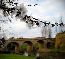 Spring comes to Richmond by Kristi Robertson