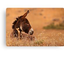 Donkey Canvas Print