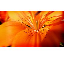 Lilly ( Living Motion )  Photographic Print