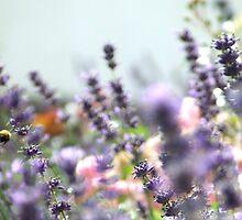 Lavender - Goal by TriciaDanby