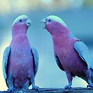 """ NOW LISTEN . - - - - YOU GALAH  !!. by helmutk"