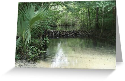 Beaver Dam and Pond on Econfina Creek by May Lattanzio