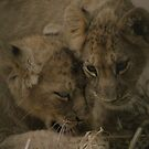 Lion Cubs by Franco De Luca Calce