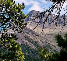 Crandell Mountain by Alyce Taylor