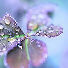 Fresh morning by Angelique Brunas