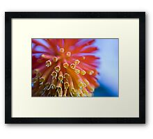 redhot pokers Framed Print