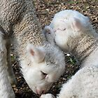 loving lambs by Juanita Arnold