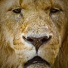 The King's Portrait .......  by jdmphotography