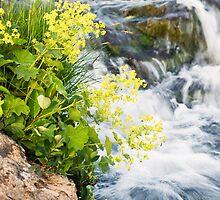 Waterfalls in Ellida River #4 by Stefán Kristinsson