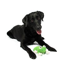 I Love My Froggie! by Misti Love