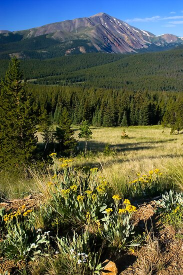 Wildflowers and The Rockies by John  De Bord Photography