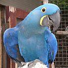 Blueboy by Goldenspirit