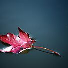A single red maple leaf floating by LjMaxx