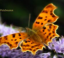 Comma Butterfly On Hebe. by Rosemariesw