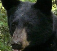 Bear portrait. by MaeBelle