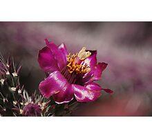 Soft Glow Photographic Print