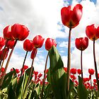 Tulip Fever by Tamela J Wolff