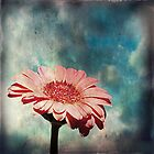 pinkish by Angel Warda