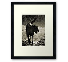 Rufus at Play Framed Print