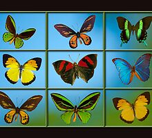 Butterflies in the Window by Bonnie T.  Barry