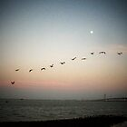 Pelicans-Sunset -& the Moon over the Galvston Causeway by Debbie Montgomery