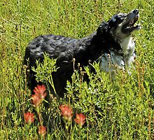 Buddy says, Hey Uncle Denny I found Indian Paintbrushes! by Edward Henzi