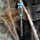Blue Dragonfly by laxwings